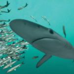 Deep Ocean shark
